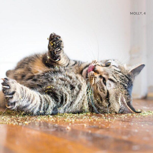 Kong Naturals Premium Catnip kattenkruid kat geniet van kattenkruid