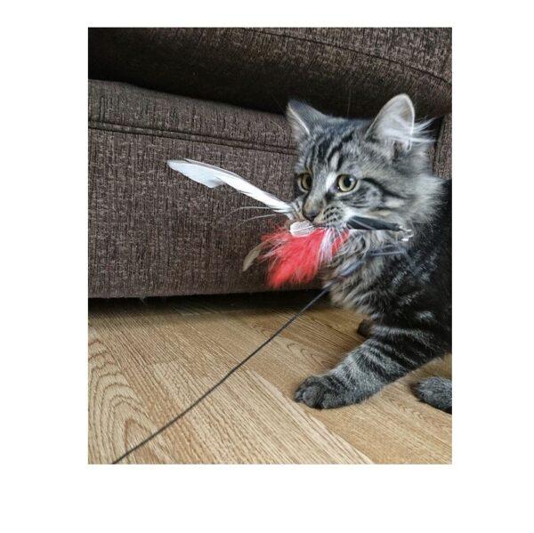 Purrs Cat Toys Purrsuit hengel kattenhengel met Feather Spinner veer prooi - geschikt voor verschillende soorten navullingen die je aan het slotje kan bevestigen - interactief spelen met je kat - kattenspeeltje - kat die speelt