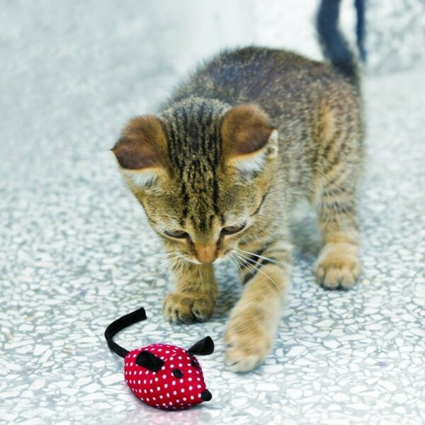 kattenspeeltje Kong Softies muisjes gevuld met kattenkruid catnip jonge kat die speelt