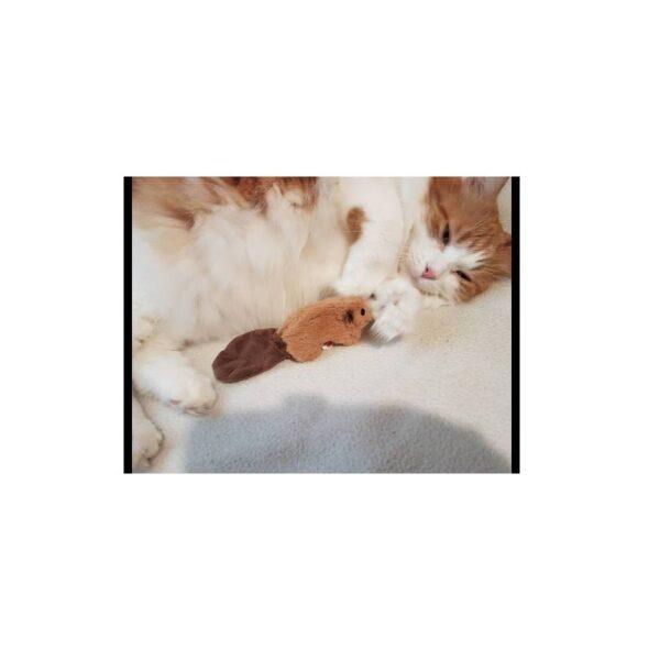 Kong Refillable Beaver - hervulbaar kattenkruid kattenspeeltje catnip