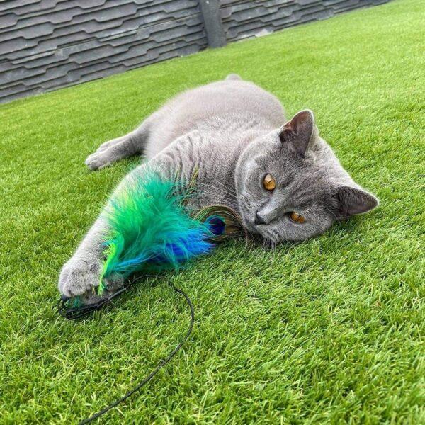 Pixie speelt met Purrs Peacock Fluffer