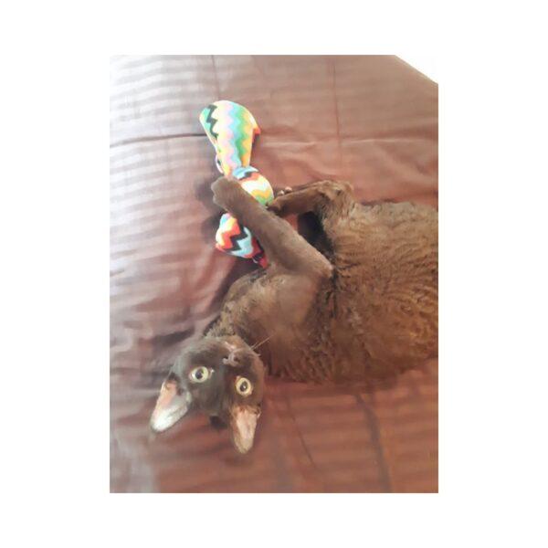 Purrs Cat Toys Giant Bonbon trappelkussen met valeriaan kattenspeeltje