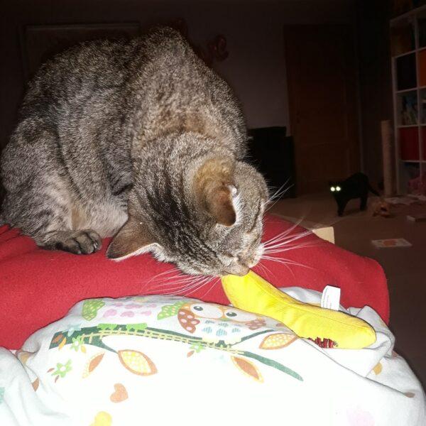 Yeowww! Chi-CAT-a Banana - kattenspeeltje banaan gevuld met super kattenkruid (catnip)