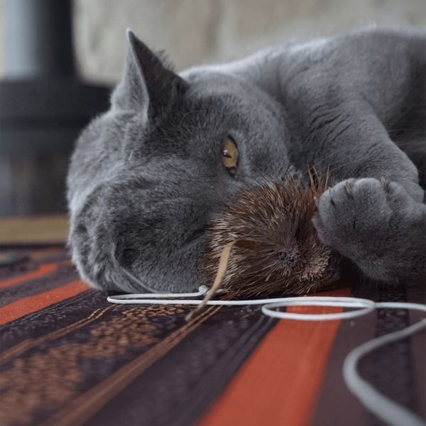 Tabby Tijger Instinct kattenhengel 90 centimeter