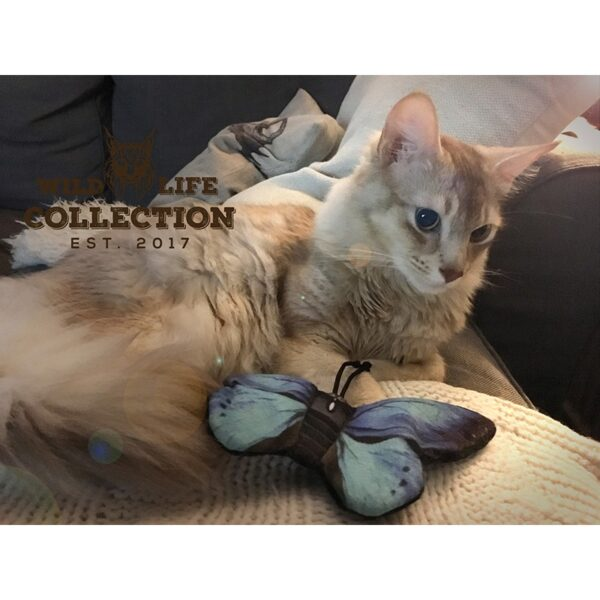 Wild Life Collection Cats - Blue Butterfly catnip