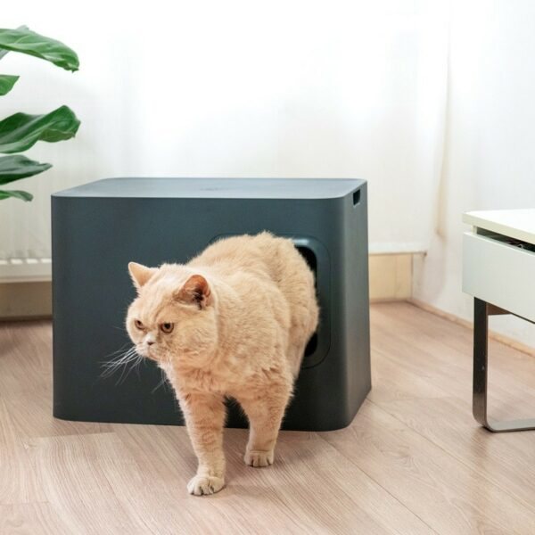 Dome kattenbak grijs kat