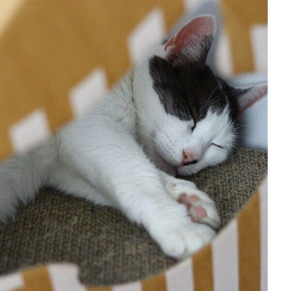 myKotty - MIA kattenhuis