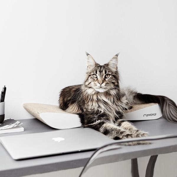 myKotty - TOBI - Wit krabmeubel scratcher kat