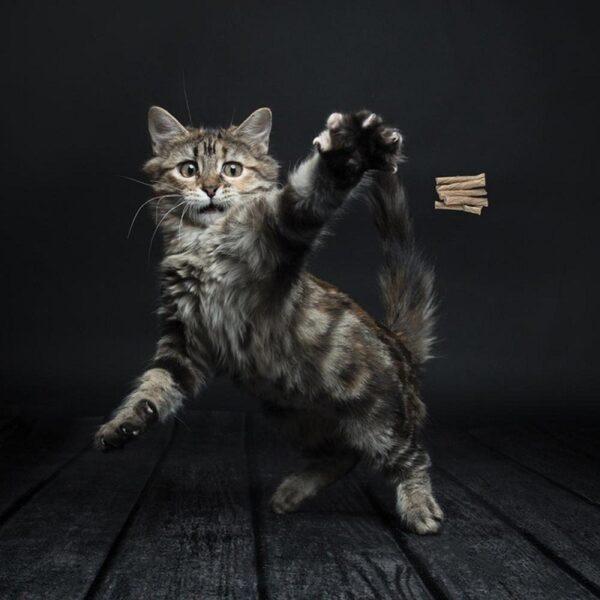 Cat Dancer kattenhengel kat speelt